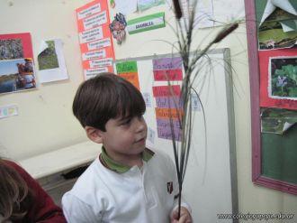 Plantas Acuaticas 9
