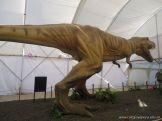 Dinosaurios en Salas de 5 29