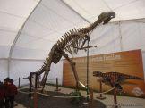 Dinosaurios en Salas de 5 37