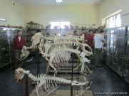 Visitamos la Facultad de Veterinaria 2
