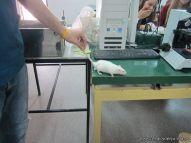 Visitamos la Facultad de Veterinaria 21