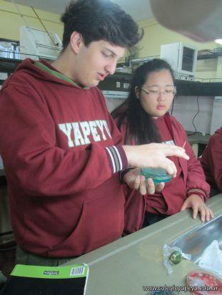 Cultivo de Microorganismos 10