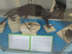 Visita al Museo de Ciencias Naturales 106