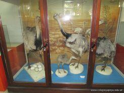 Visita al Museo de Ciencias Naturales 107