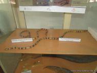 Visita al Museo de Ciencias Naturales 124