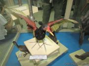 Visita al Museo de Ciencias Naturales 63