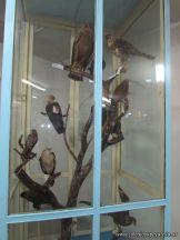 Visita al Museo de Ciencias Naturales 68