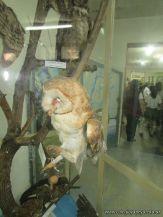 Visita al Museo de Ciencias Naturales 69