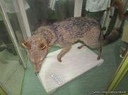 Visita al Museo de Ciencias Naturales 74