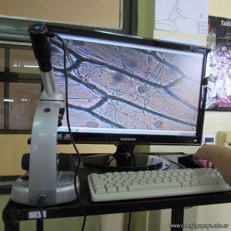 Uso del Microscopio 1