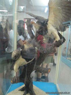Visita al Museo de Ciencias Naturales 10