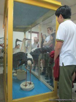 Visita al Museo de Ciencias Naturales 6