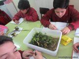Plantas Acuaticas 19