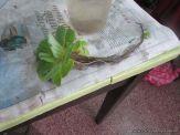 Plantas Acuaticas 27