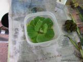 Plantas Acuaticas 29