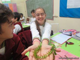 Plantas Acuaticas 45