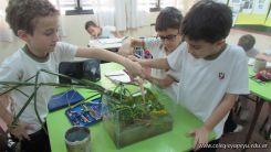 2do grado con Plantas Acuaticas 12