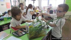 2do grado con Plantas Acuaticas 14