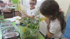 2do grado con Plantas Acuaticas 16