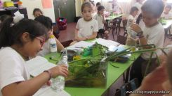 2do grado con Plantas Acuaticas 17