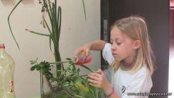2do grado con Plantas Acuaticas 3