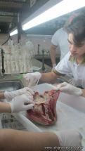 Sistema Circulatorio 4