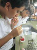 Extraccion de ADN 8