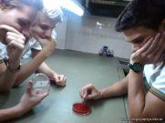 Cultivo de Microorganismos 6