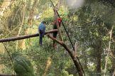 Viaje a Iguazu 87