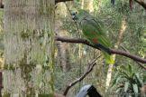 Viaje a Iguazu 88