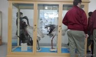Visita al Museo de Cs. Naturales Amado Bonpland 5