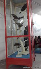 Visita al Museo de Cs. Naturales Amado Bonpland 6
