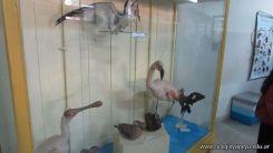 Visita al Museo de Ciencias Naturales 7