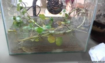 Adaptaciones de las plantas al ambiente acuático 6