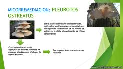 Biorremediación 3