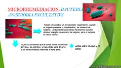 Biorremediación 4