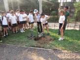 Día del árbol 33