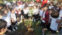 Día del árbol 8