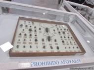Insectos plaga 18