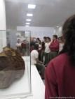 Visita al museo de Ciencias Naturales 19