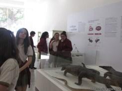 Visita al museo de Ciencias Naturales 56