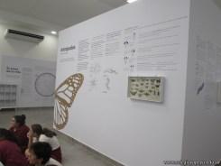 Visita al museo de Ciencias Naturales 65