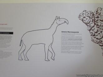 Visita al museo de Ciencias Naturales 9