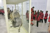 Visita al museo de Cs. Naturales 39