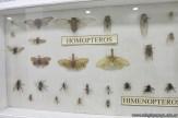 Visita al museo de Cs. Naturales 70