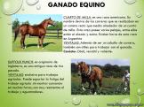 Cría de animales en Argentina 2