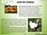 Cría de animales en Argentina 3