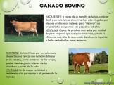 Cría de animales en Argentina 4