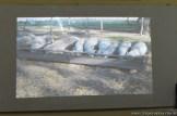 Cría de animales mediante feed lot 13