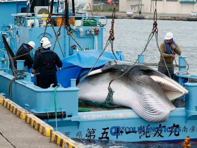 caceria de ballenas